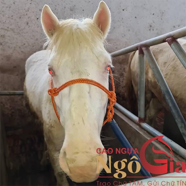Ngựa bạch khác ngựa trắng
