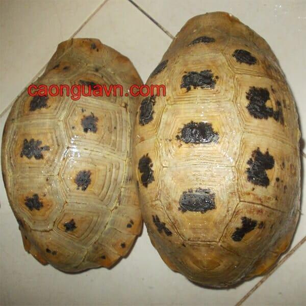 Cao mai rùa còn được gọi là cao quy bản