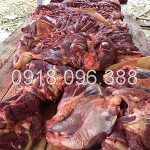 Mua thịt ngựa ở đâu tại Hà Nội